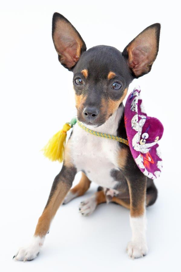 Download Dog litet arkivfoto. Bild av hemhjälp, framsida, muzzle - 977472