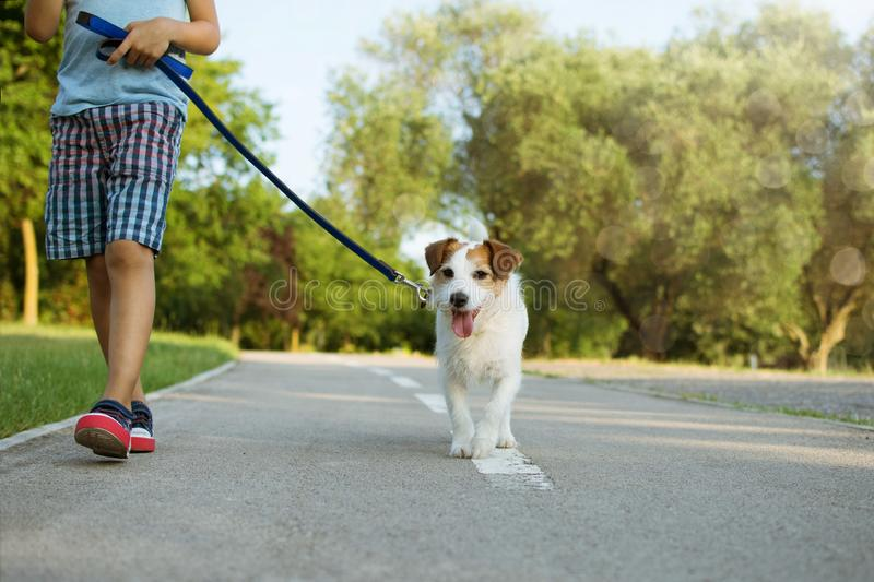 Dog and little child walking at the park. Obedience and friendship concept.  royalty free stock photography