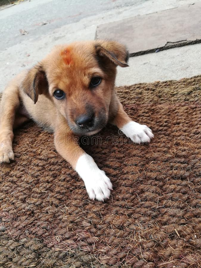 A puppy that lives on the road. This is image is A puppy that lives on the road royalty free stock photos
