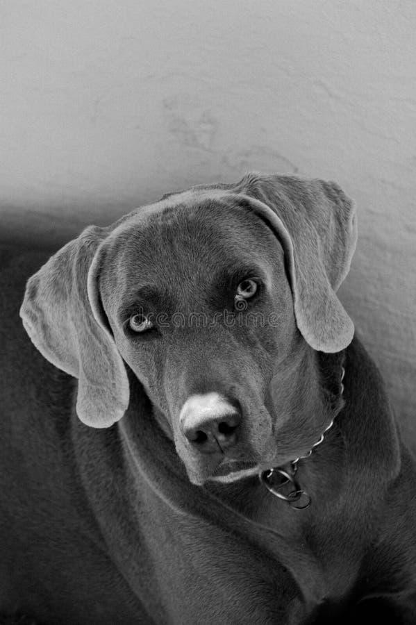 Dog look stock photos