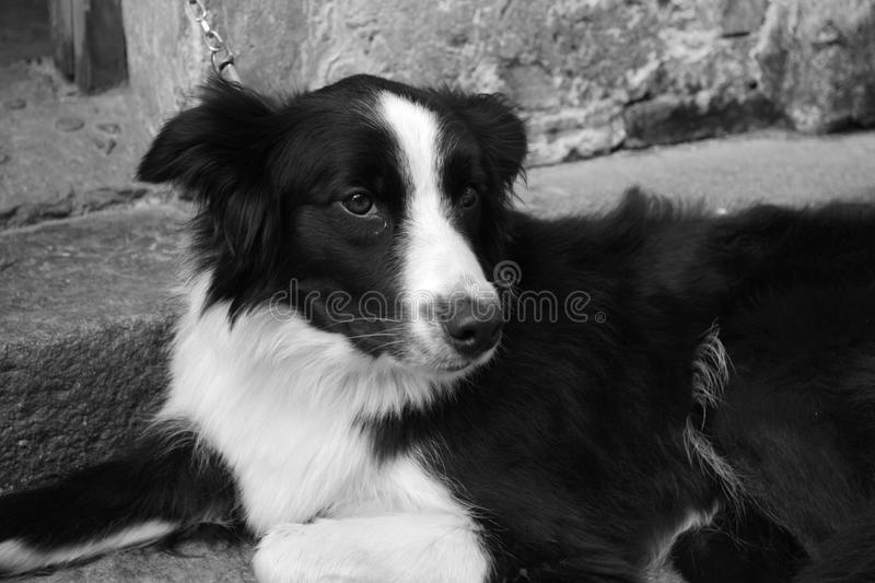Dog look at me royalty free stock photography