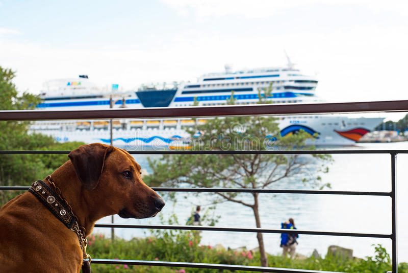 Dog looking from balkony to the ship Aida Mar. Dog sitting on a balcony and looking to the German luxury ship Aida Mar. Its the newest one of the whole Aida stock photo
