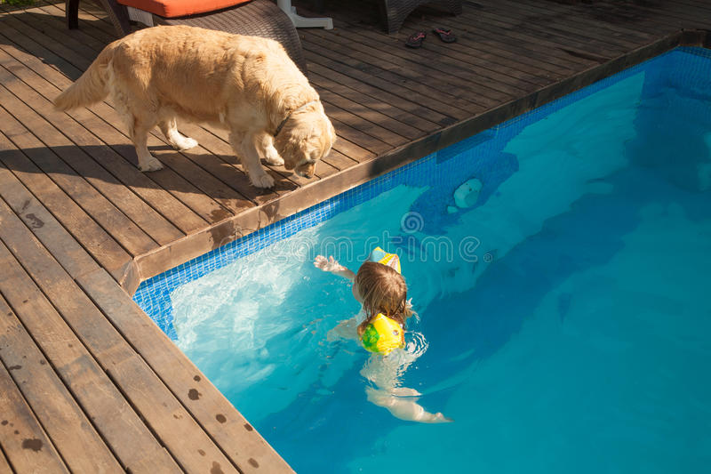 Dog looking child in water pool. Big Golden Retriever dog looking at three years old blonde child with yellow floater sleeves in arms in blue water of swimming stock photography