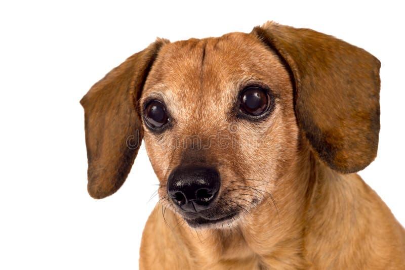 Dog Looking Forward Stock Photos