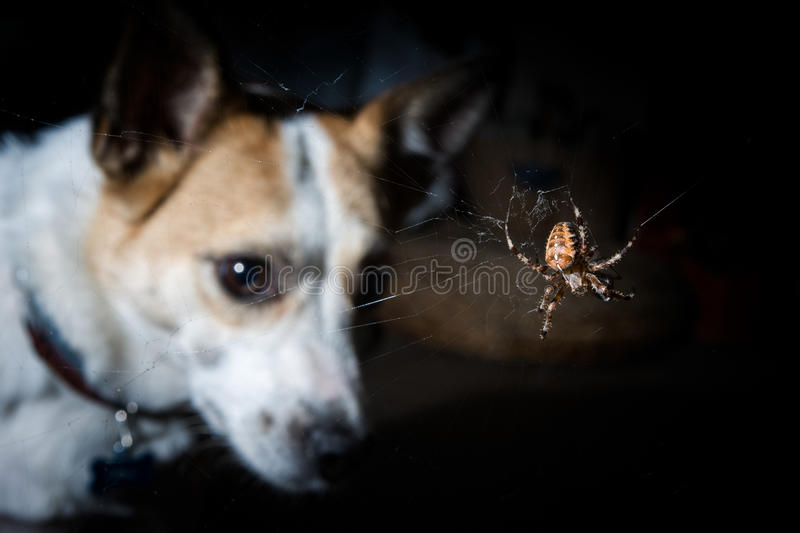 Dog looking at a garden spider royalty free stock images