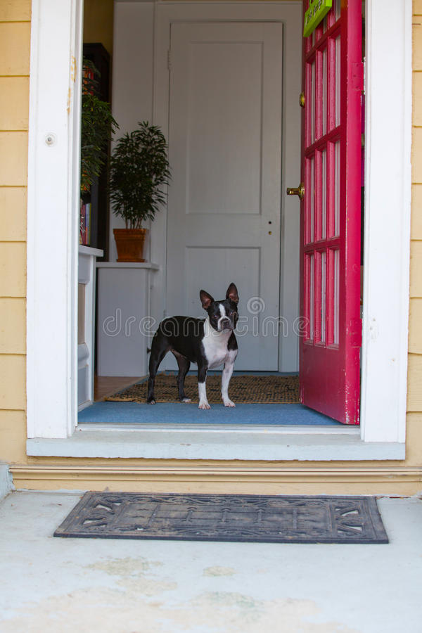 Dog Looking Out The Front Door Stock Image - Image of head, door ...