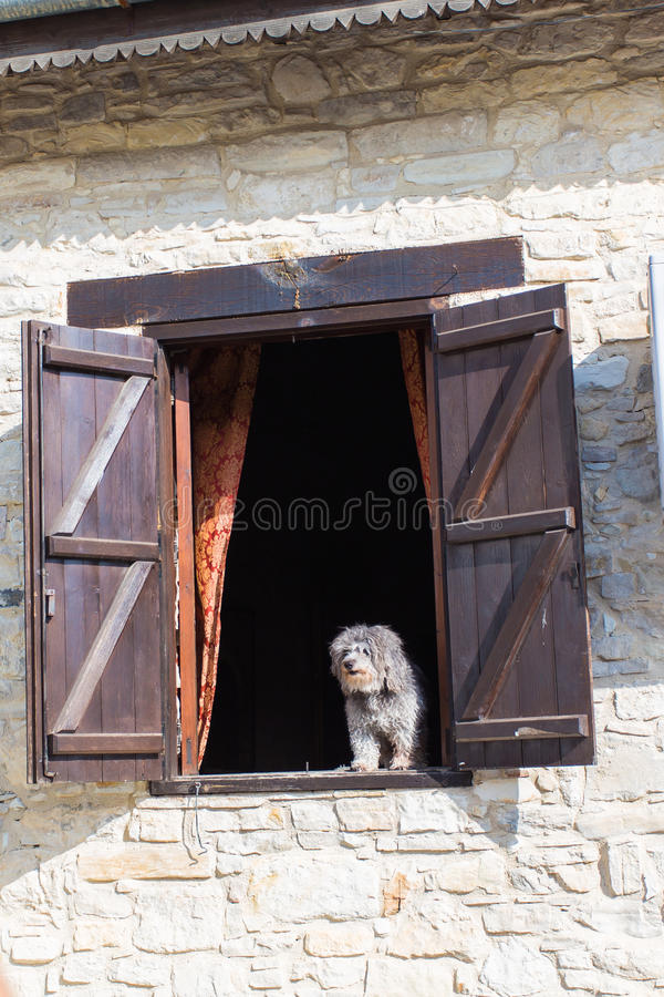 Dog looking out from window royalty free stock images