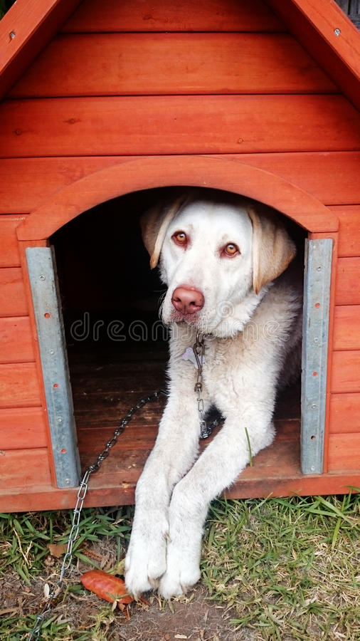 Dog looking outside from kennel stock photography