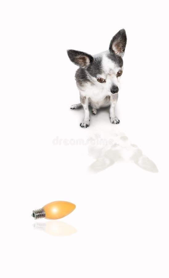 Dog looking at product royalty free stock photo