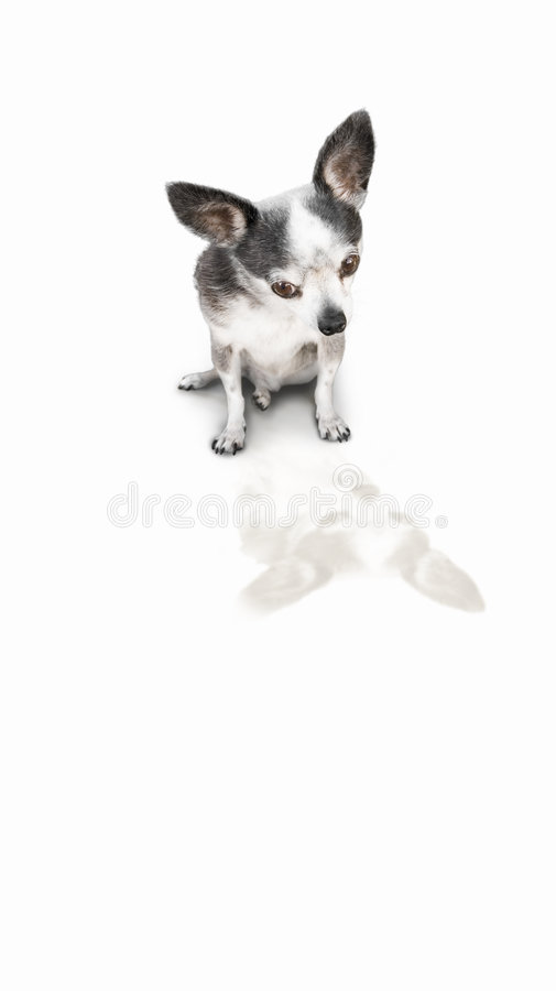 Dog looking at product royalty free stock photography