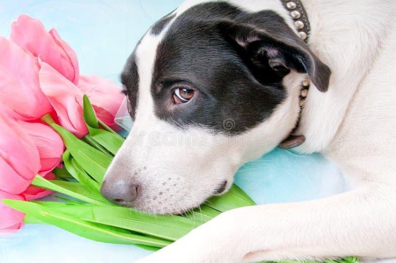 Dog Looking Sad Stock Image