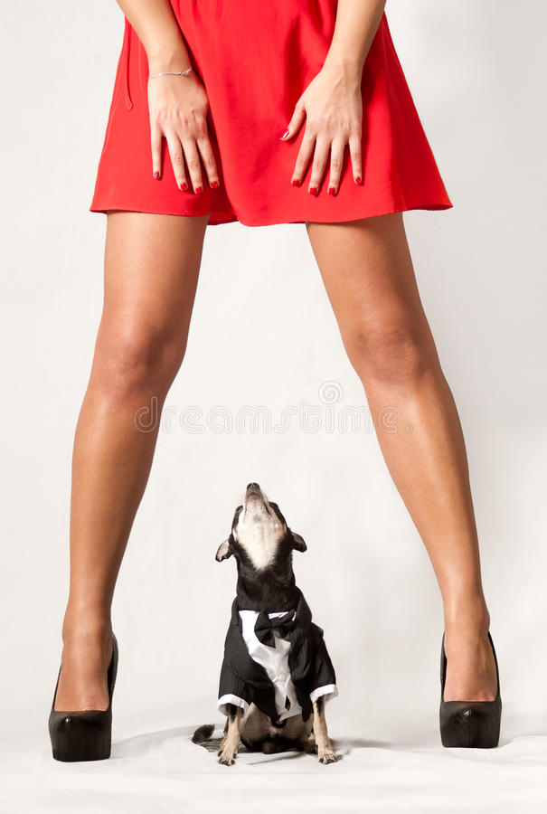 Free Dog Looking Upskirt Royalty Free Stock Photos - 42416168