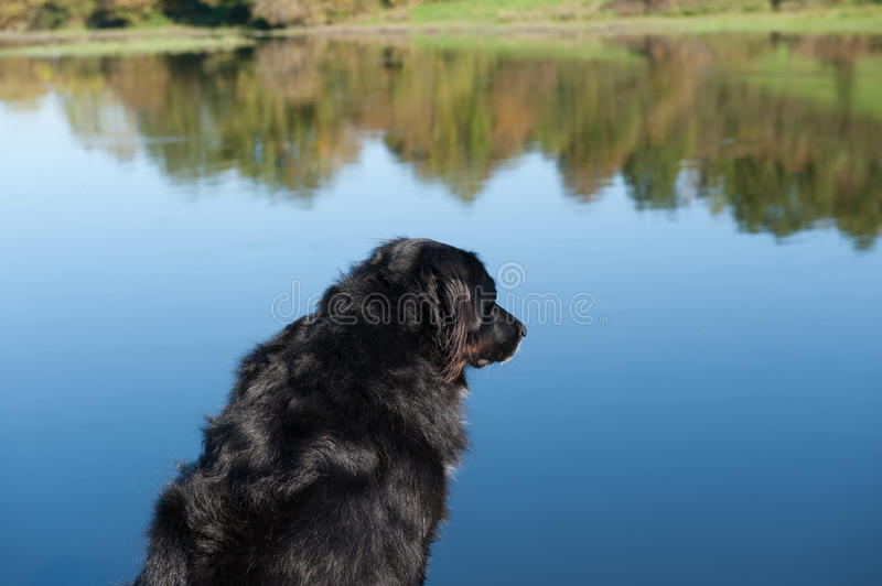 Dog looking on the water royalty free stock image