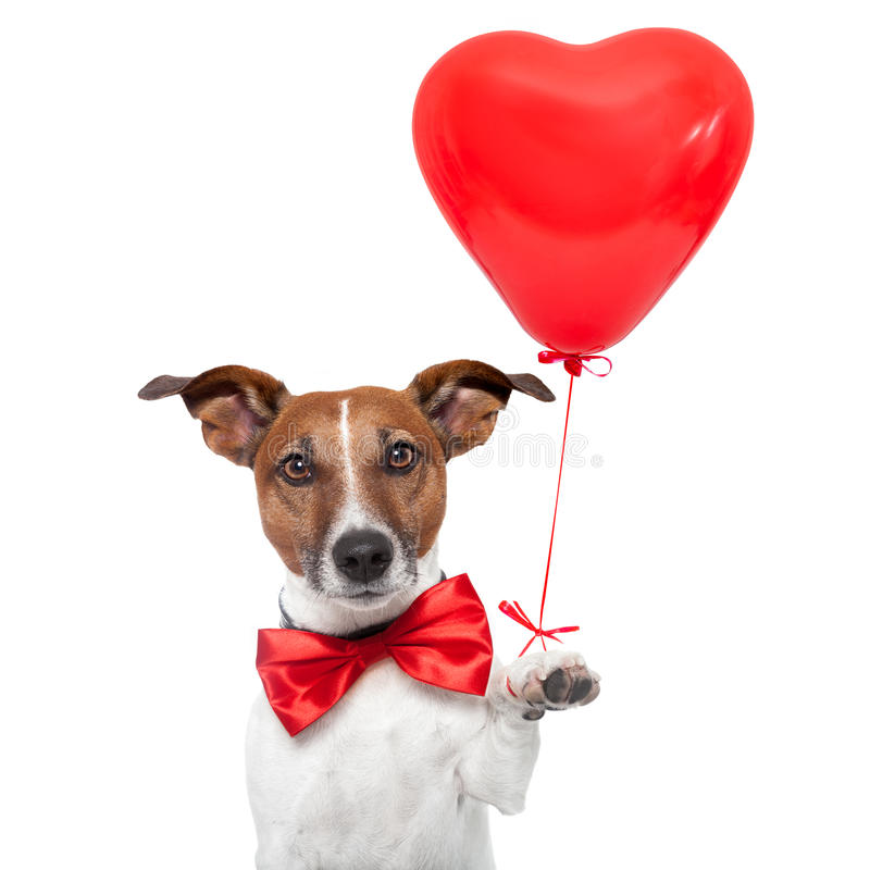 Dog in love. With a red heart balloon