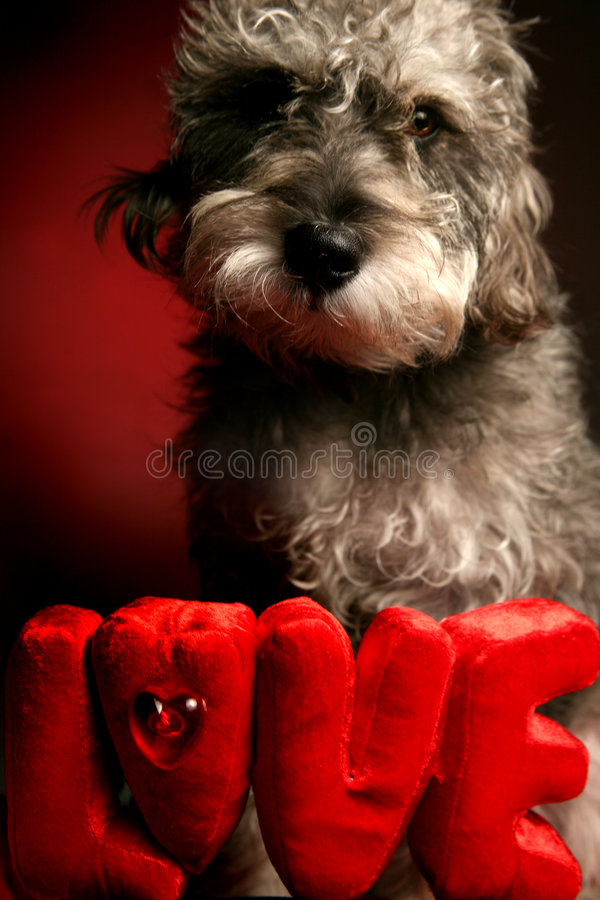Dog Love stock images