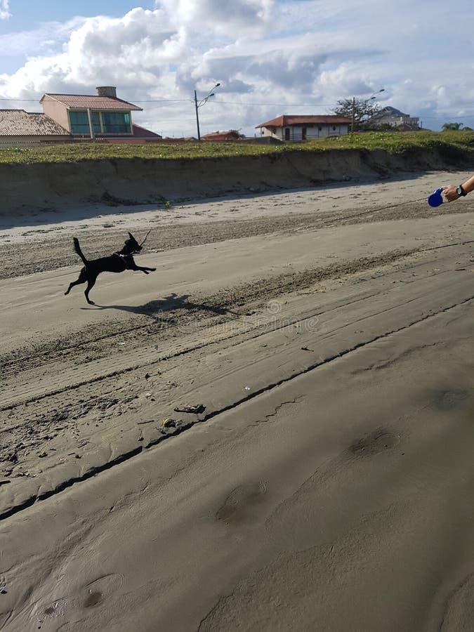 Dog love cachorro cacau eyes fêmea animal animals. Dog love cachorro cacau fêmea animal animals beach praia sky free lonely stock image