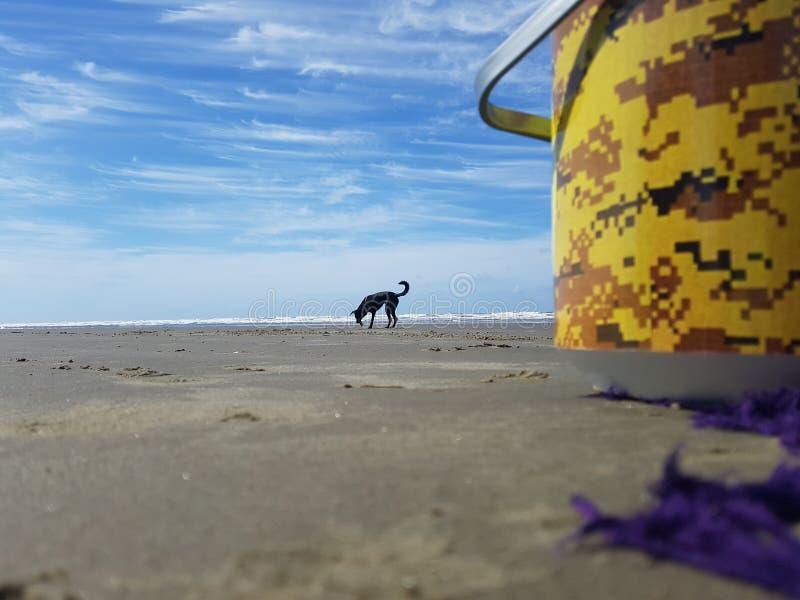 Dog love cachorro cacau eyes fêmea animal animals. Dog love cachorro cacau fêmea animal animals beach praia sky free lonely stock photography