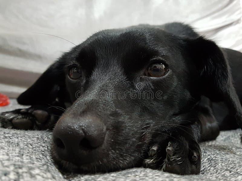 Dog love cachorro fêmea animal animals. Dog love cachorro cacau eyes fêmea animal animals royalty free stock photography