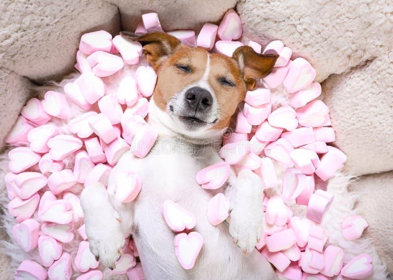 Download Dog Love Rose Valentines Stock Photo - Image: 83721711