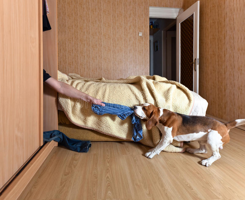 Dog and lover. The dog found a lover in the closet stock images