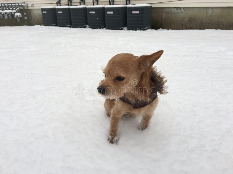 Dog Loving Snow stock images