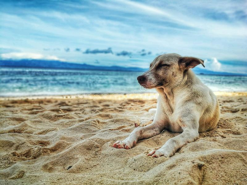 Dog Lying on Beach stock photo