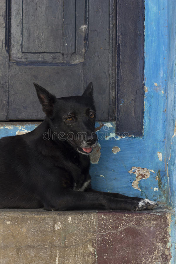 Dog lying down with an old house behind royalty free stock images