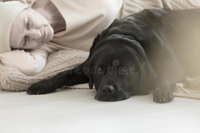 Dog lying by sick owner. Black dog lying by its owner sick with cancer strengthening their bond, and participating in pet therapy stock images