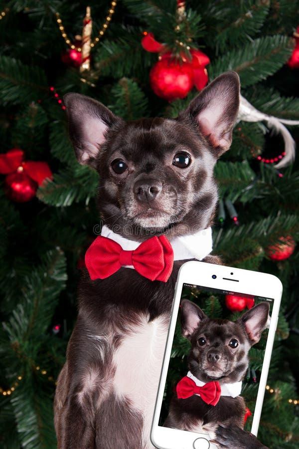 Dog make selfie. With Christmas tree royalty free stock image