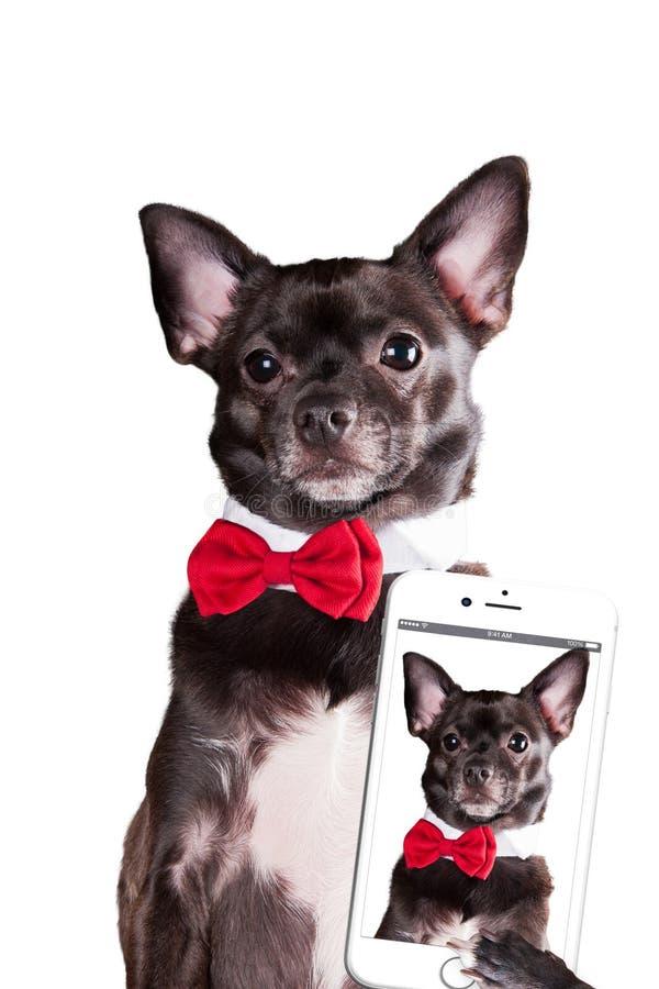 Dog make selfie. On white background royalty free stock photo