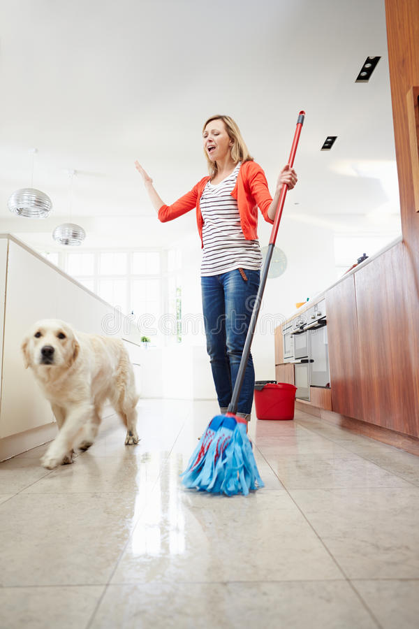 Dog Making Mess Of Newly Mopped Floor. At Home Walking Towards Camera stock image
