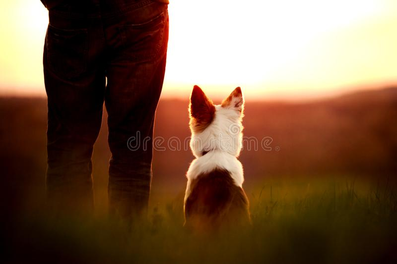 Dog an Man looking at the sunset, camping and traviling with the stock images