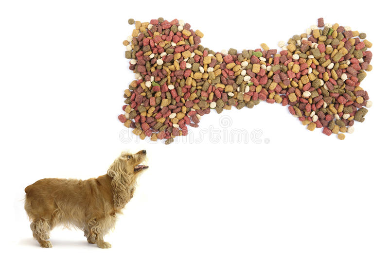 Dog mat. arkivfoto