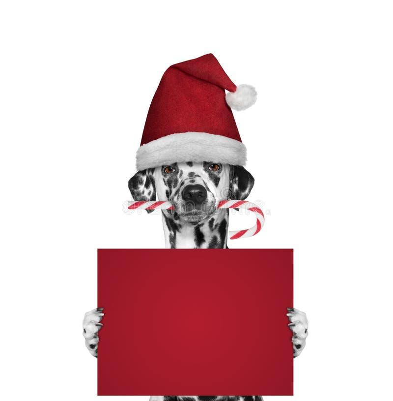 Dog med julgodisen som rymmer ett kort med utrymme för text royaltyfria foton