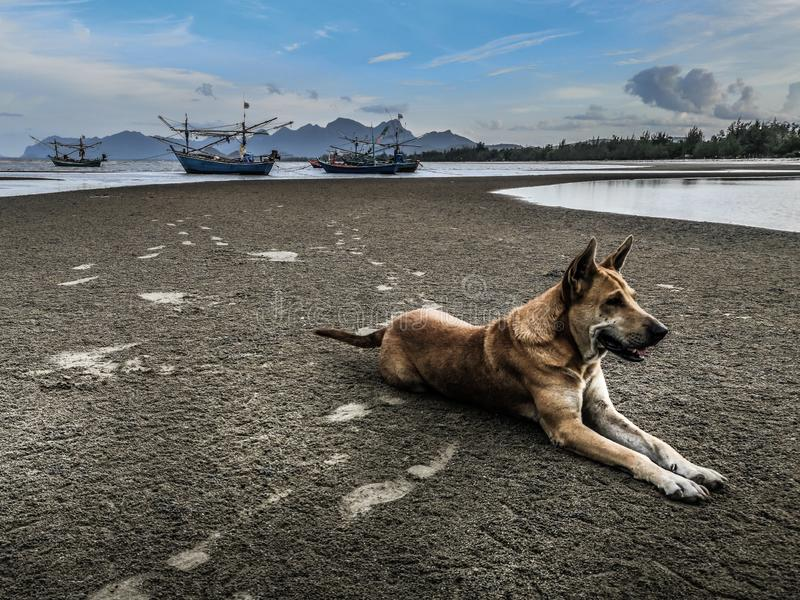 Dog meditating on the dark beach at low tide with foot prints on the sand royalty free stock photos