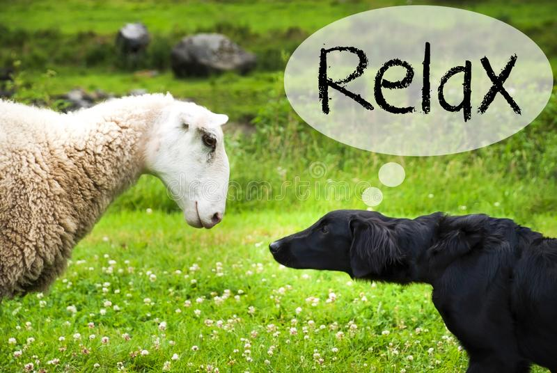 Dog Meets Sheep, Text Relax, Green Grass royalty free stock photos