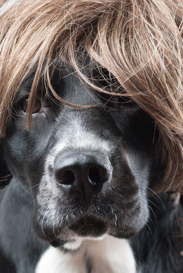 Dog Model Stock Image