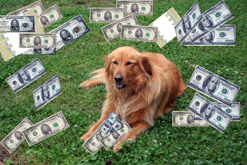 Download Dog With Money stock image. Image of dollars, currency - 9053311
