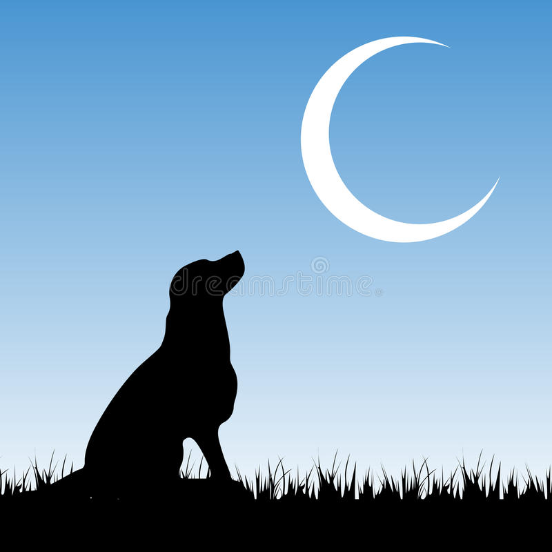 Dog and moon royalty free stock photography