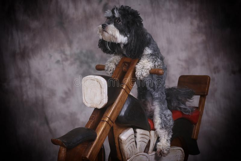 Dog and motorbike stock photo