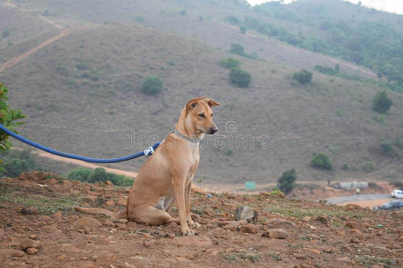 Dog on the mountain top stock photo