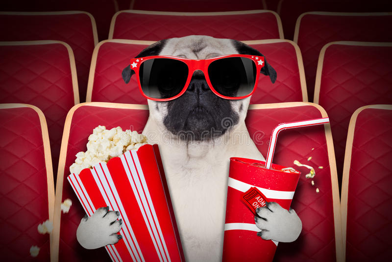 Dog at the movies stock image