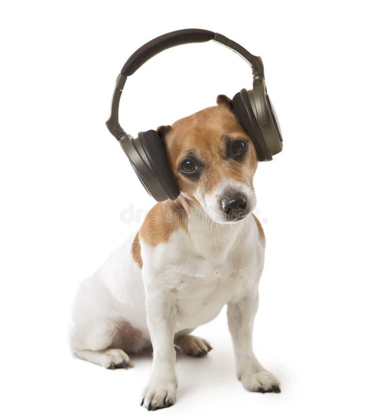 Dog music fan royalty free stock photo