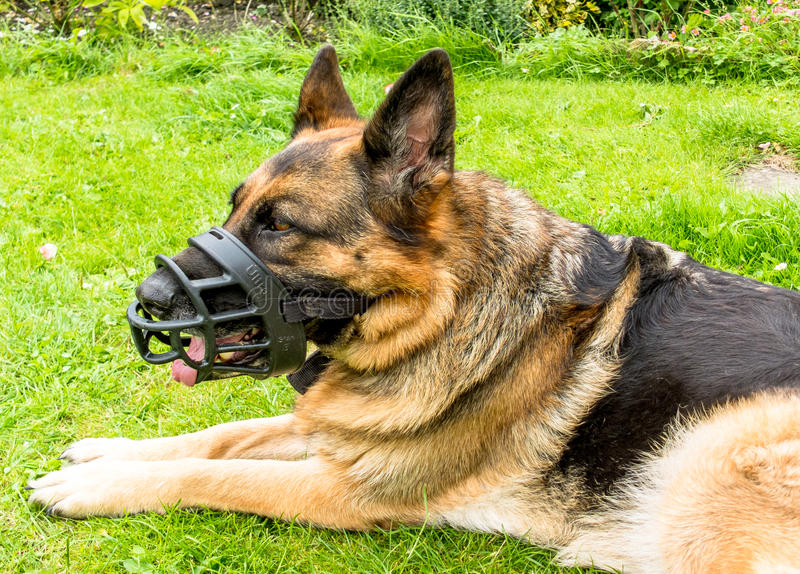 Dog with Muzzle stock photos