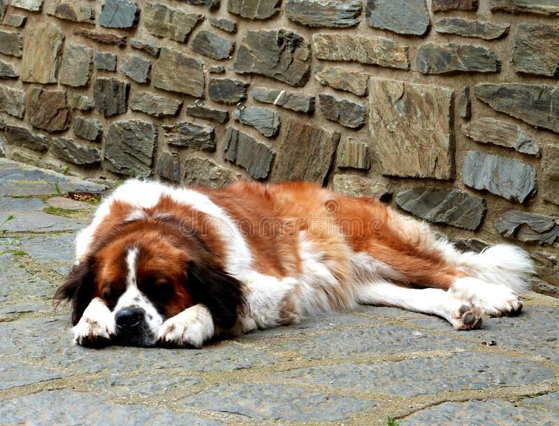 Dog Napping Outdoors Free Public Domain Cc0 Image