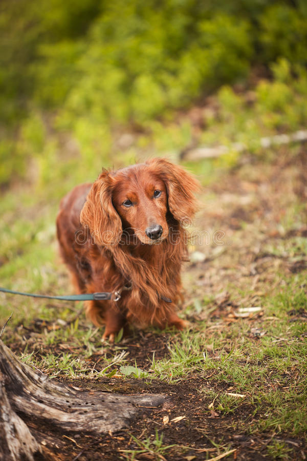 Dog In Nature Stock Photography