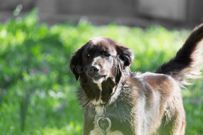 Dog in nature . In the park in nature royalty free stock photo