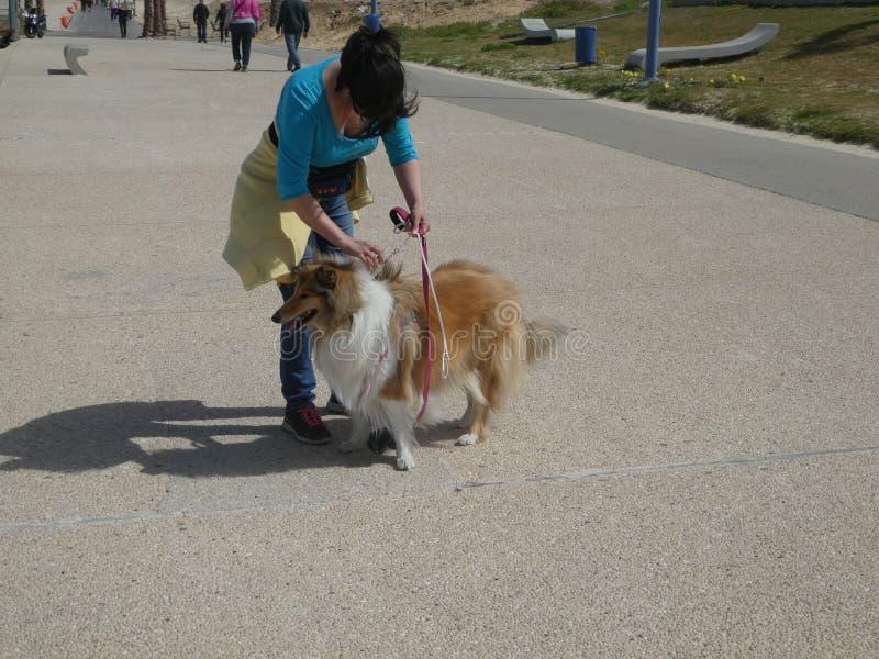 Dog nature run stock photos