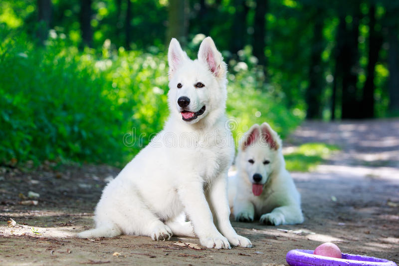 Download Dog On Nature Royalty Free Stock Images - Image: 32048349