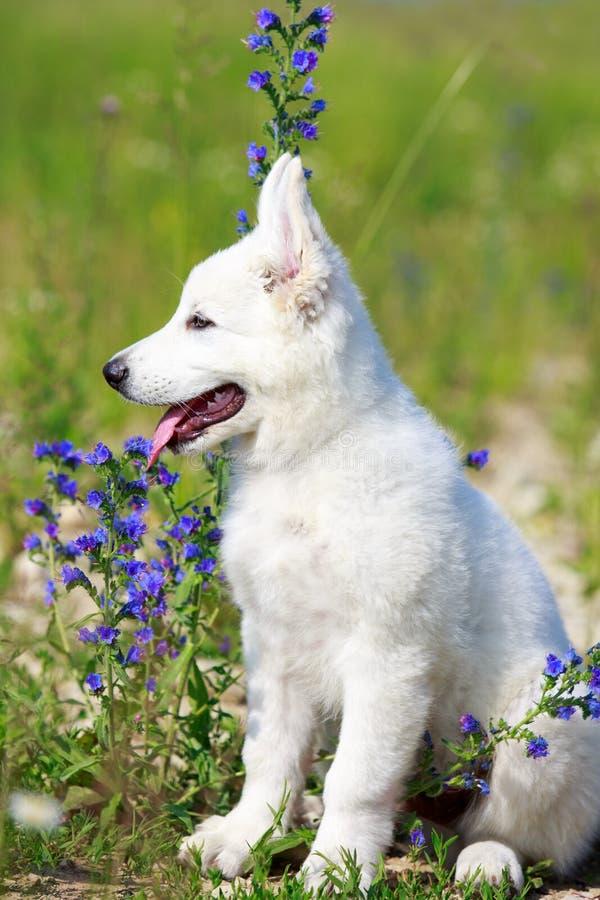 Dog On Nature Stock Image